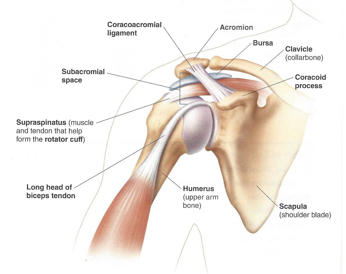 7 Key Exercises To Prevent Shoulder Injuries Foreverfitscience