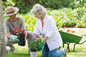 older couple gardening